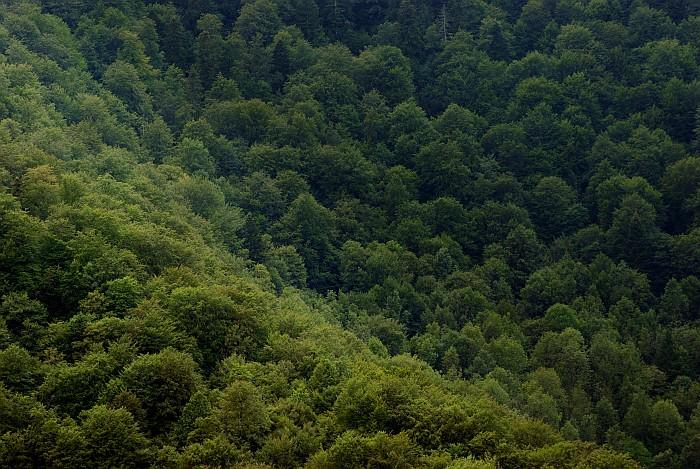 Zelena tapiserija
