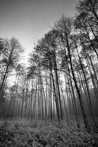 Atmosfera maglenog dana