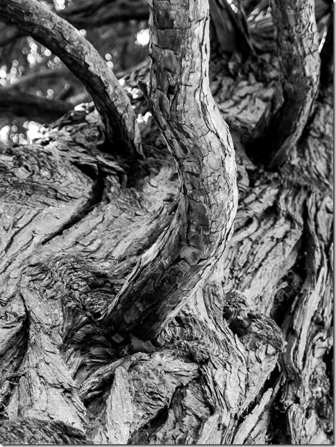 Detalj stabla