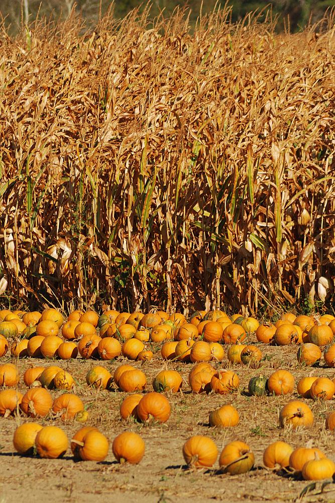 Sjedinjene boje jeseni_1