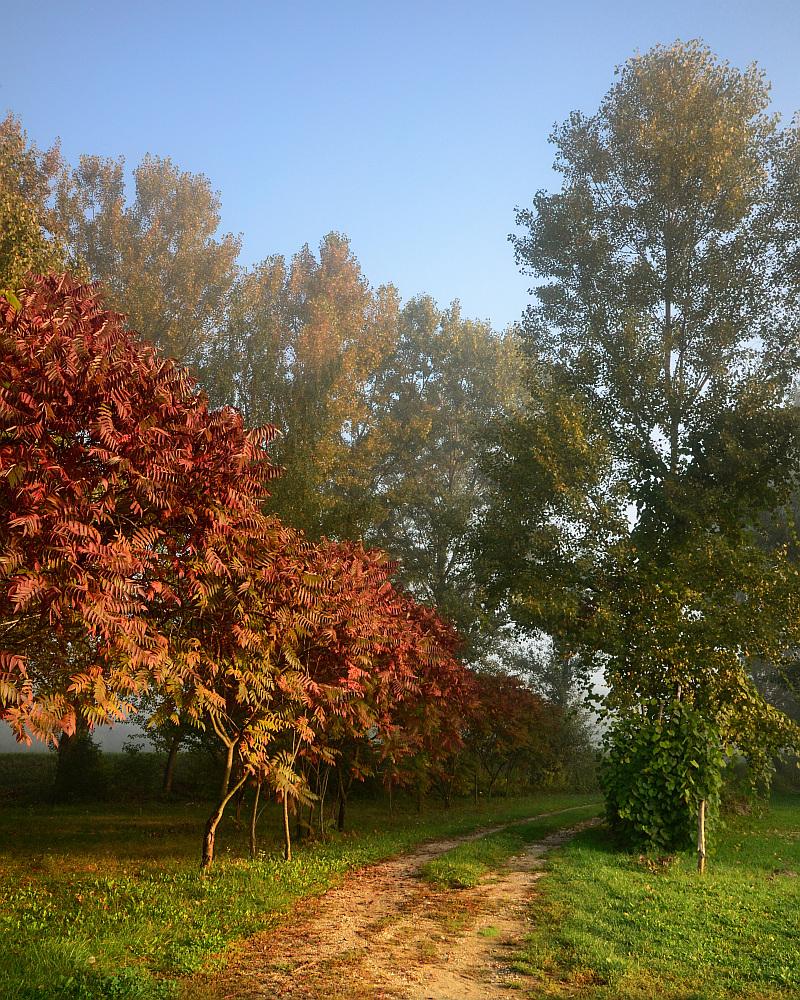 Sjedinjene boje jeseni_2