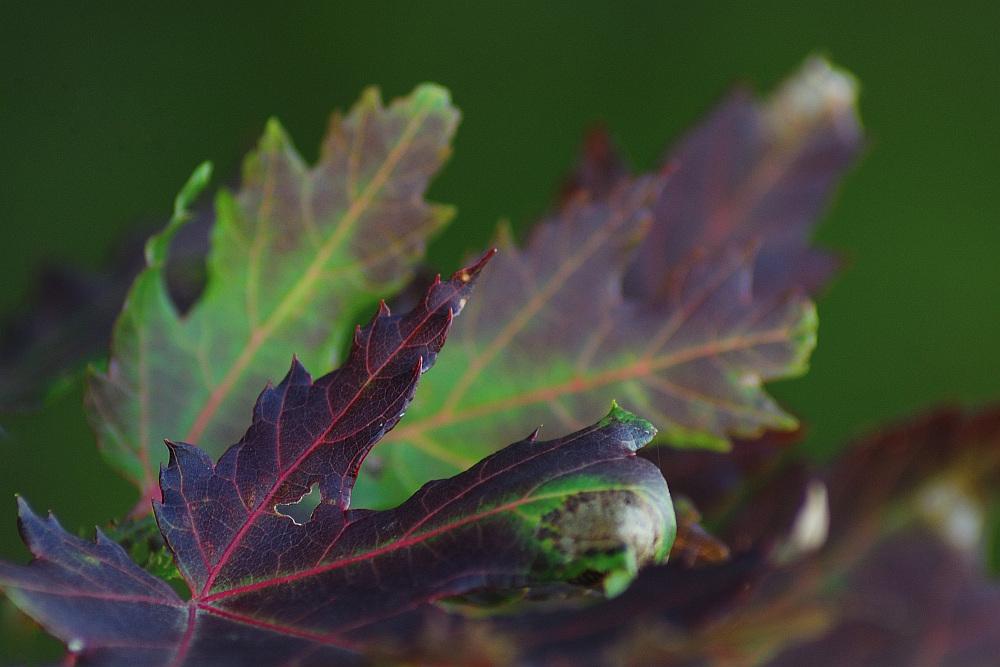 Sjedinjene boje jeseni_5