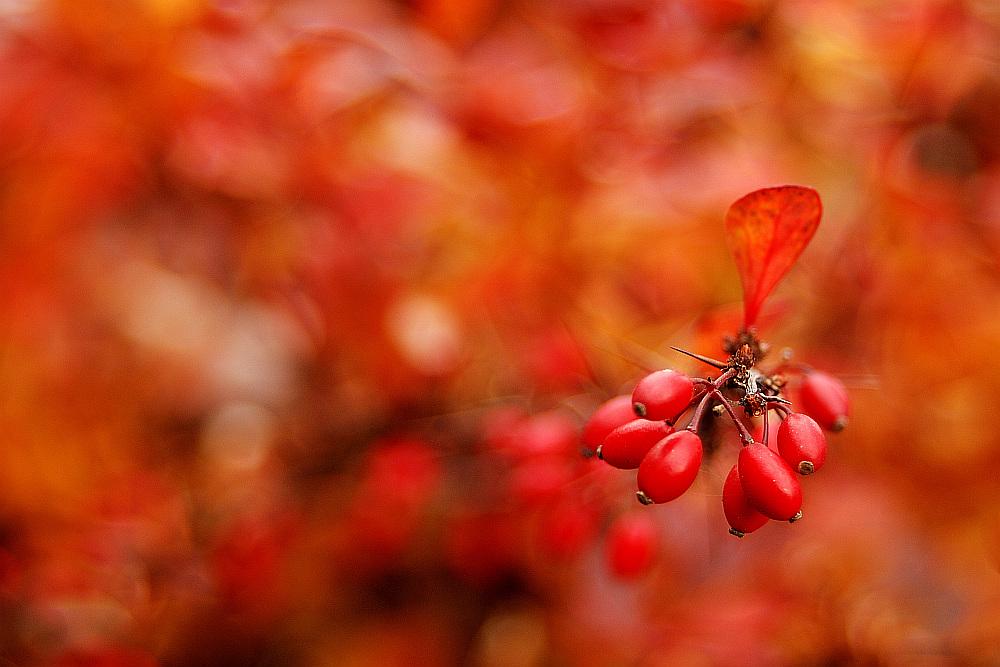 Sjedinjene boje jeseni_7