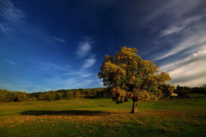 pejzaž_bez_prednjeg_plana_usamljeno_stablo