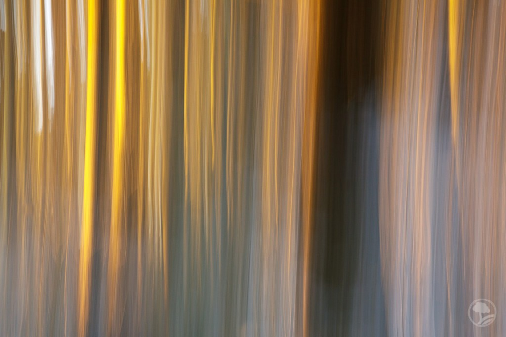 ICM šuma 1