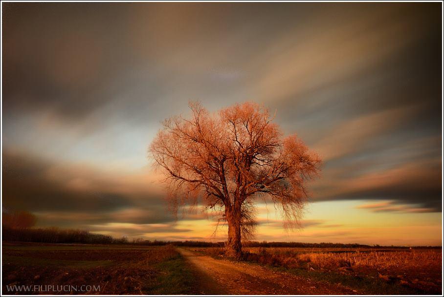 istraživanje lokacije_stablo