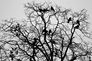 Davor Žerjav Ptice Ptice 1