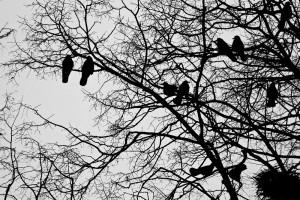 Davor Žerjav Ptice Ptice 2