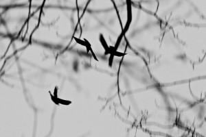 Davor Žerjav Ptice Ptice 3