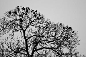Davor Žerjav Ptice Ptice 4