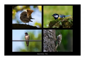 Davor Krčmar - Ptice