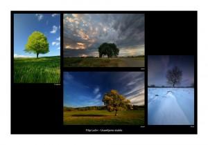 Filip Lučin - Usamljeno stablo